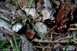 Un orologio che funziona male non segna mai l'ora esatta. Un orologio rotto la segna due volte al giorno.