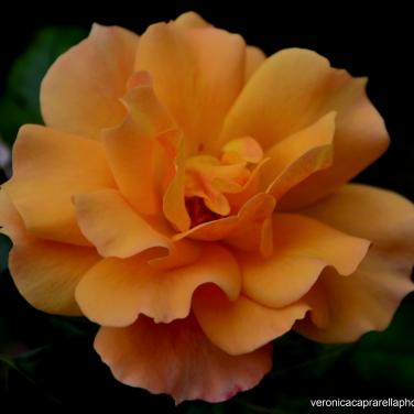 Ognuno di noi è un fiore diverso e quello che va bene adesso vale solo adesso.